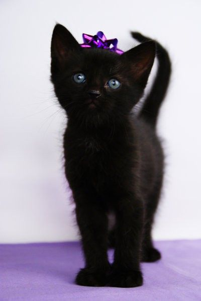 love this black kitten! the purple bow tops it off!