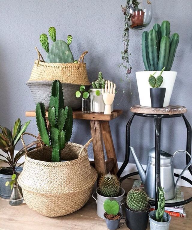 Cactus and succulents interiors styling. I want them all!!