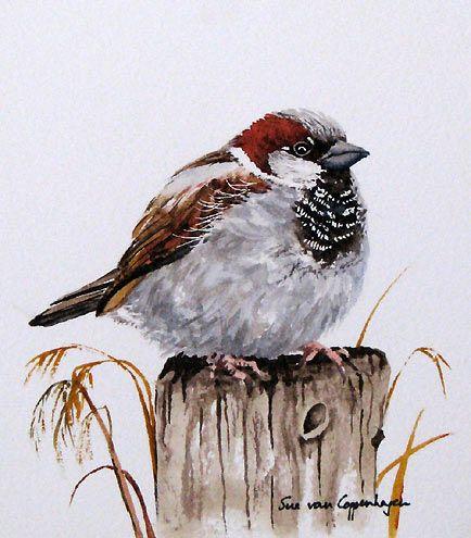 sparrow by Sue Van Coppenhagen
