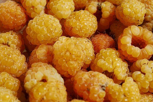 gelbe himbeeren framboise jaune yellow raspberry