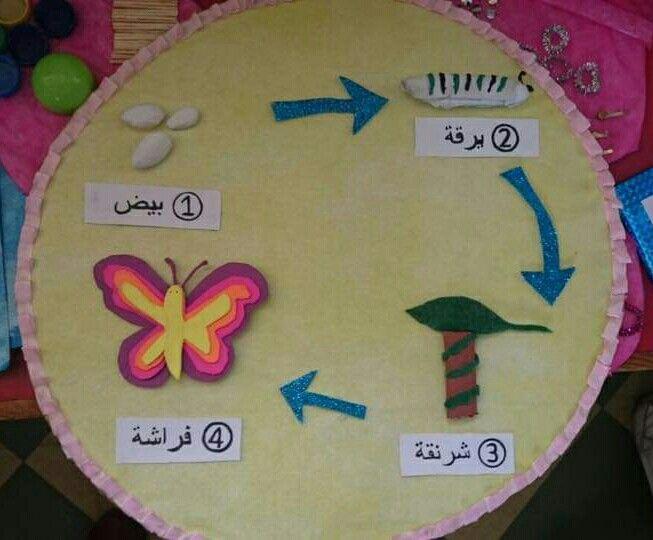 دورة حياة الفراشة Crafts Animation Art Tutorial