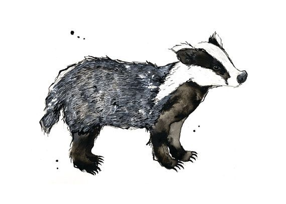Badger - 5 x 7 inch print of original illustration - woodland creatures collection on Etsy, $12.27