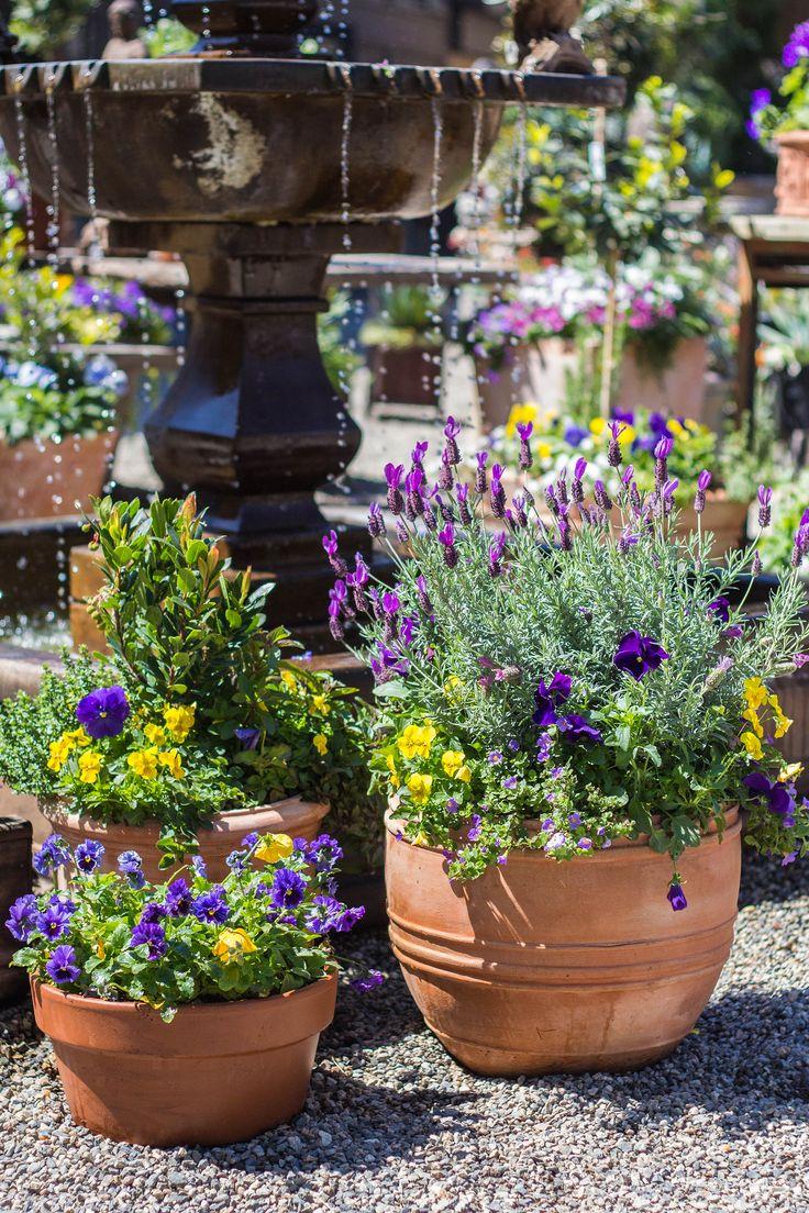 Beautiful springtime arrangements! http://shop.rogersgardens.com/browse.