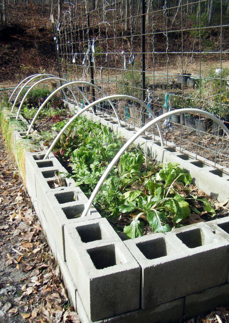 Found On Bing From Www Pinterest Com In 2020 Cinder Block Garden Garden Beds Raised Garden