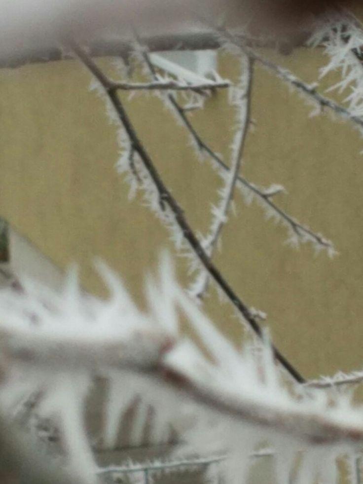 A zúrzmara borította téli udvar!