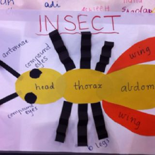 Teaching parts of an Insect through construction - the kids made their own too!
