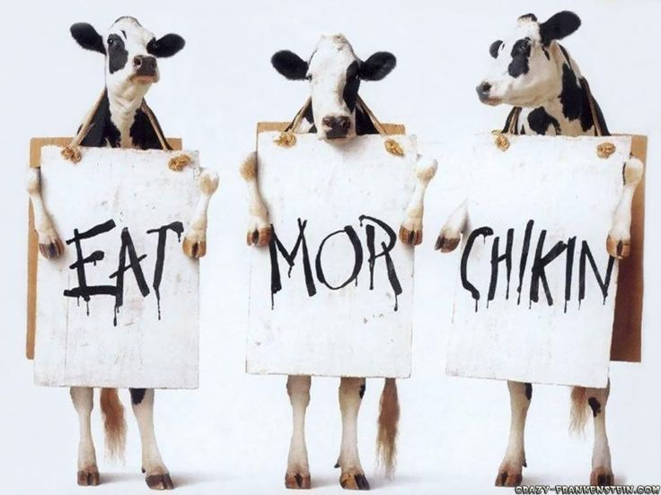 Cows' Suggestions