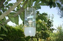 Cómo hacer 3 Trampas caseras para moscas                                                                                                                                                                                 Más