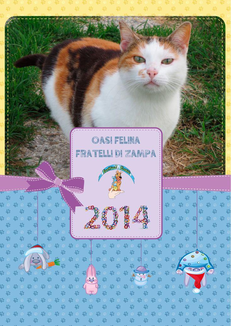 #calendar #cat #calendario #gatti