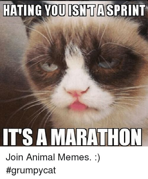 best 25 grumpy cat valentines ideas on pinterest valentines quotes funny hilarious what rhymes with smile and cat memes hilarious - Grumpy Cat Valentine