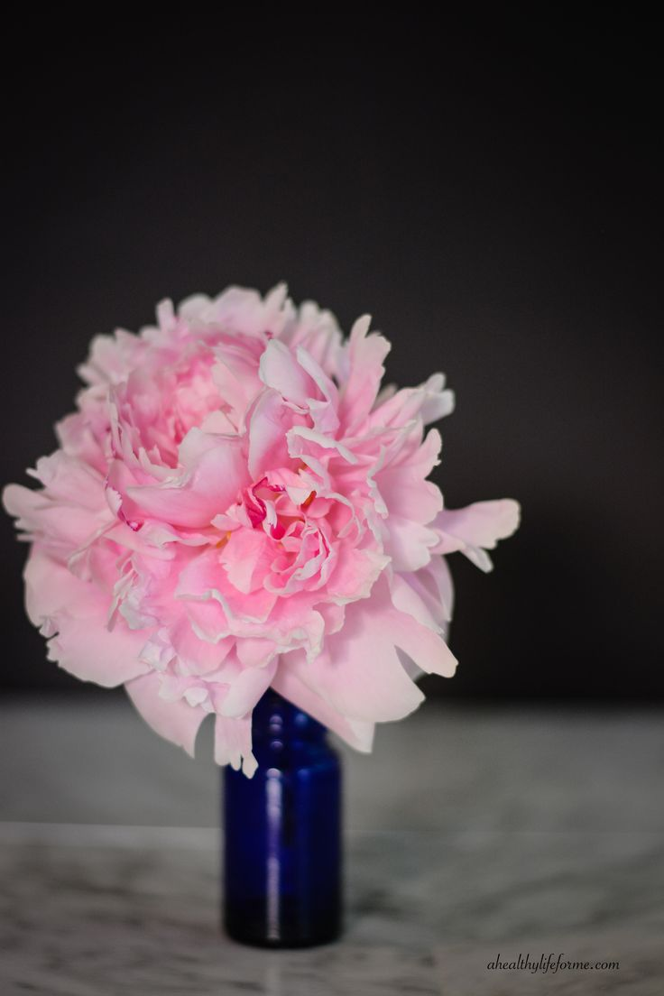 25+ trending Peony plant ideas on Pinterest | Peony care tips, How ...