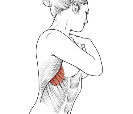Exercises that help you sculpt the sexiest cuts, contours, and lines; zero in on these surprising muscles!