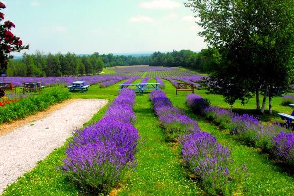 A Food Lover's Tour of the Eastern Townships, Quebec