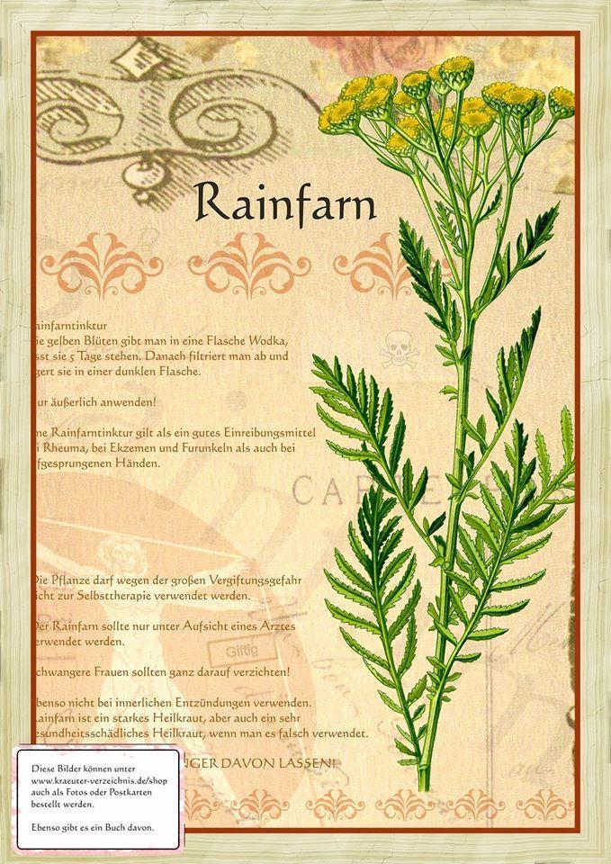 Rainfarn http://www.kraeuter-verzeichnis.de/