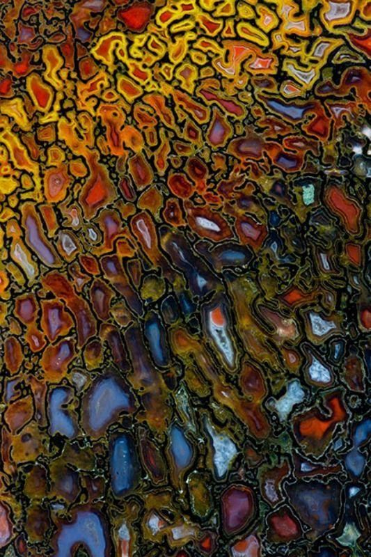 Vivid   Mixed   Color   Colour   цвет   カラー   Couleur   Colore   Petrified Dinosaur Bone