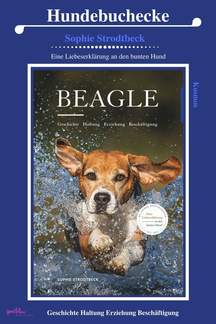 Beagle Geschichte Haltung Erziehung Beschaftigung Mit Bildern
