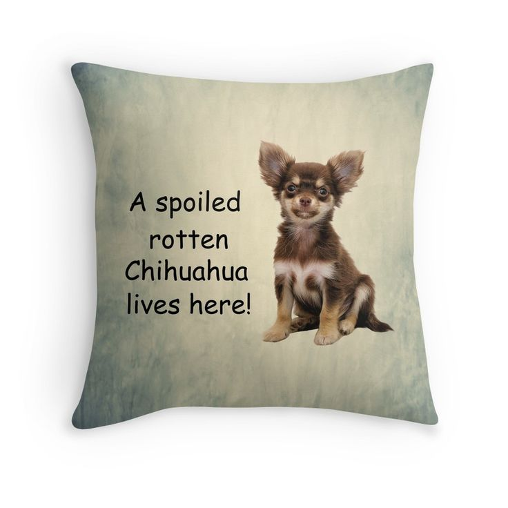 A #Spoiled Rotten #Chihuahua #Dog Lives Here #spoiledpets