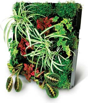 LIVING WALL 1 Module Kit Plant Your Own Green Wall By Plantesque EUR7900