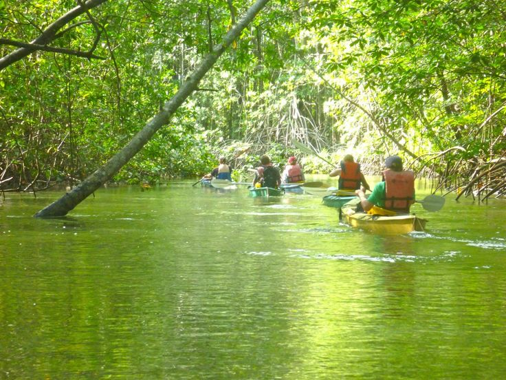 Kayaking mangroves, Puerto Viejo Costa Rica