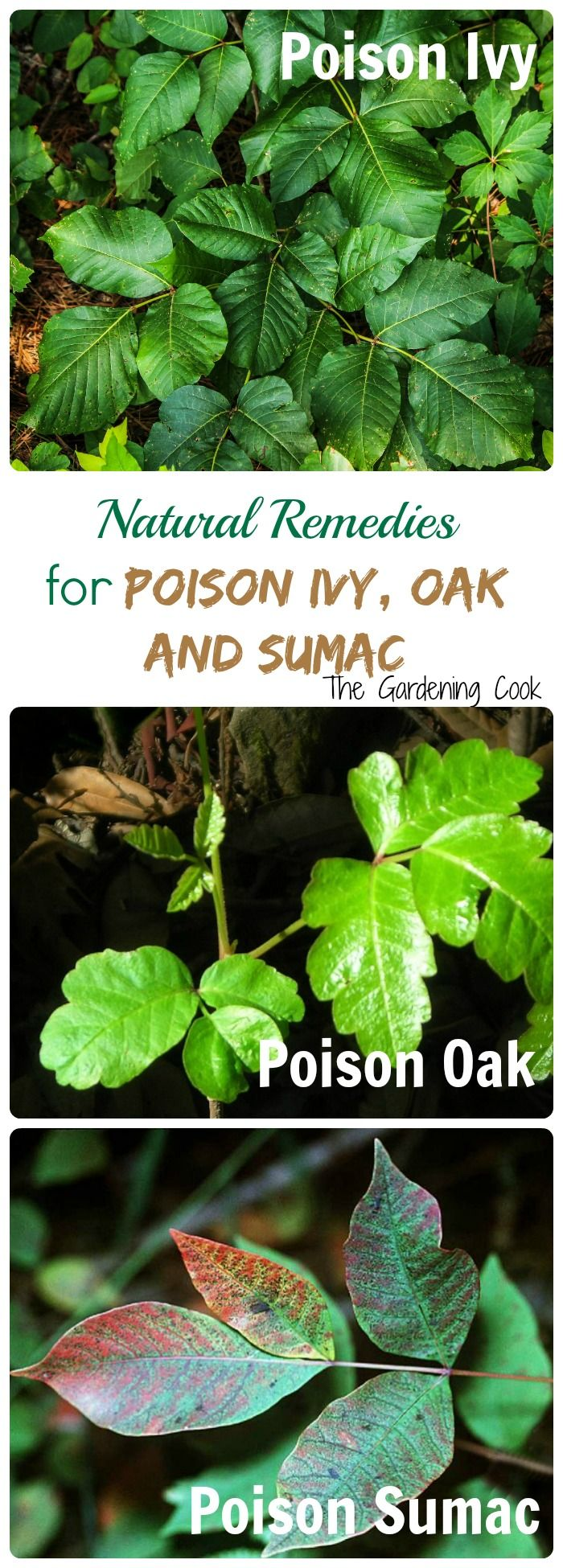 Natural Remedies for Poison Ivy, Poison Oak and Poison Sumac. Leaves of three, let them be! thegardeningcook.com