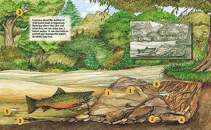 Brook trout habitat