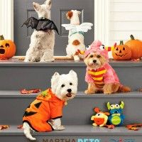 Martha Stewart Pets Halloween Costume Contest