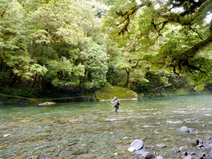 South Island pristine streams and trophy trout.
