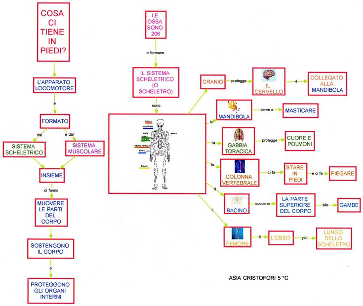 Mappa scienze: Scheletro