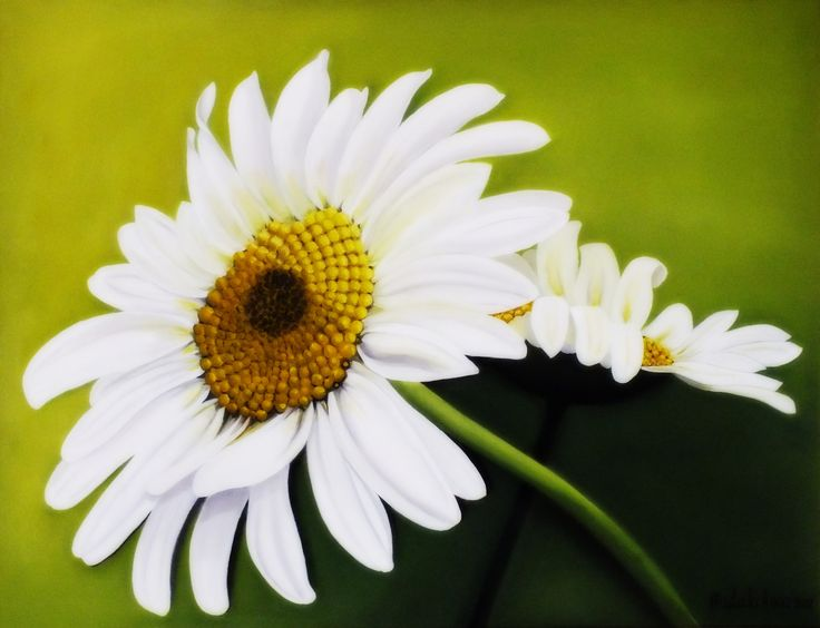 "oil painting ""daisy"""