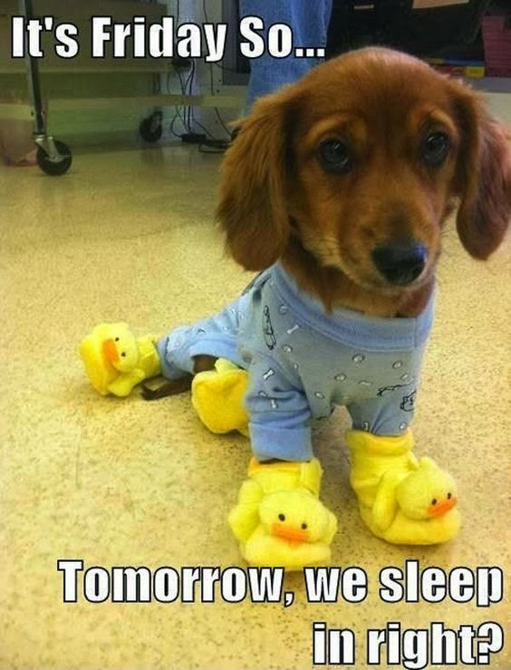 It's Friday So....Tomorrow We Sleep In Right? friday friday quotes friday images friday quotes and sayings friday sayings
