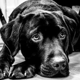 Puppy eyes by Paul Feeley