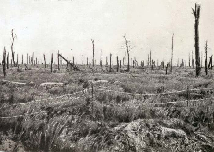 The shattered remains of Delville Wood shortly after the War