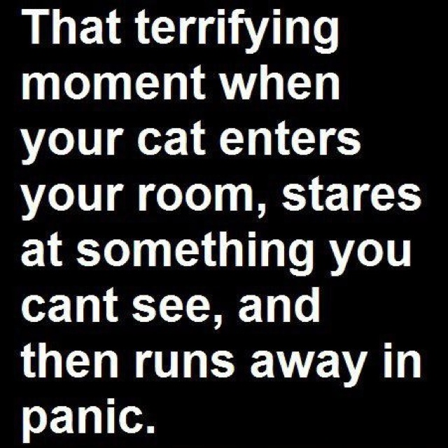 Cat Sees Ghost Meme