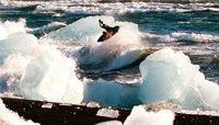 """Strange Rumblings"" surfing entre hielo en Islandia"