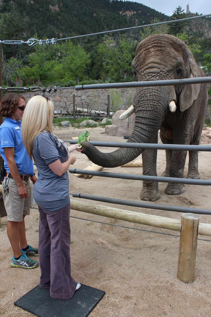 You can hand-feed the beautiful elephants at Cheyenne Mountain Zoo - America's only mountain zoo