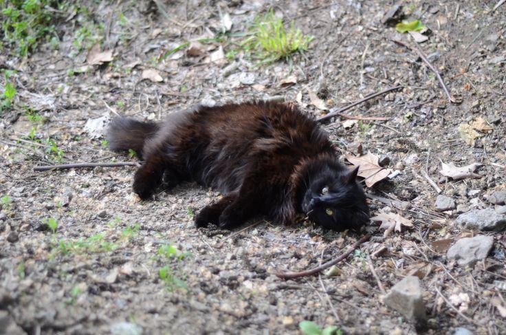 #Cat #BlackCat #Pet #Pets