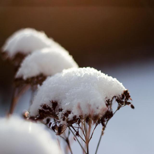 Vom Schnee ist bei uns nichts mehr übrig 🙈 Dafür hat heute die 🌞 ihr bestes gegeben 😍 Ich hoffe, morgen ist es genau so & ich kann mit etwas Glück den Sonnenuntergang fotografieren 💞⠀⠀⠀⠀⠀⠀⠀⠀⠀ ⠀⠀⠀⠀⠀⠀⠀⠀⠀ #Schnee #Natur #Gegenlicht