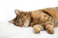 La gastro-entérite du #chien et du #chat - #Blog #animalerie #zoomalia http://www.zoomalia.com/blog/article/gastro-enterite-chien-chat.html