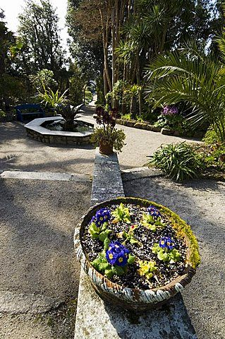 The Abbey Gardens, Tresco, Isles of Scilly, off Cornwall, United Kingdom, Europe