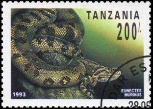 Common Anaconda (Eunectes murinus)