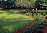 Lawn Care Schedule for Central Texas