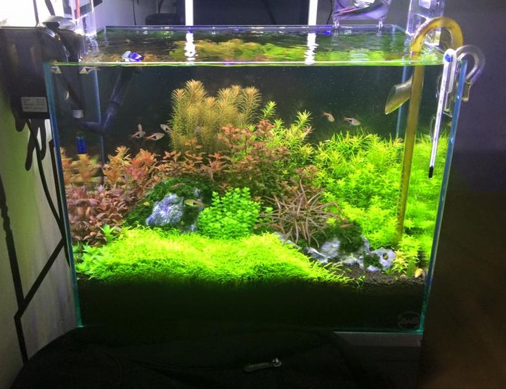 aquascape aquarium paludarium aquarium aquascapes planted aquariums ...