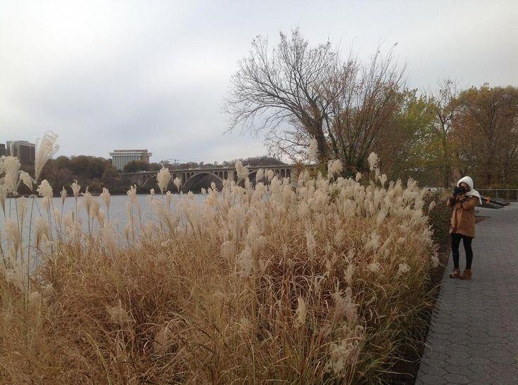 Nuansa musim gugur di tepi Sungai Potomac di Georgetown Washington DC. #rivers #ipad2pics #moniquerijkersindonesia #georgetowndc by monique_rijkers