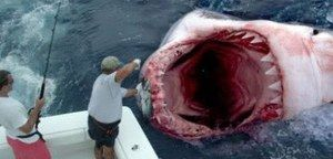 GOD SAVES MAN FROM GREAT WHITE SHARK ATTACK!!