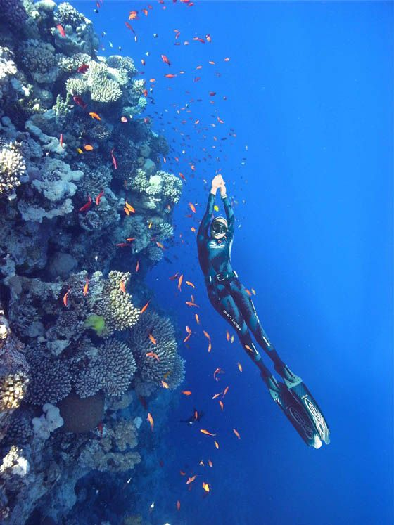 363 Best Spearfishing & Freediving Images On Pinterest
