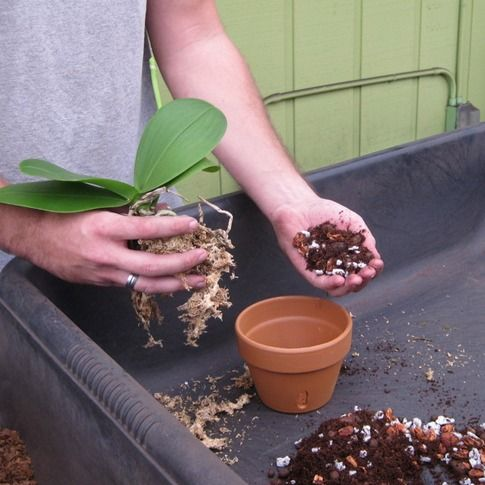 Find the latest collection of orchid potting from Green Barn Orchid Supplies, we are providing you a better quality of orchid potting, For more info call at 561-499-2810 and email in sales@greenbarnorchid.com