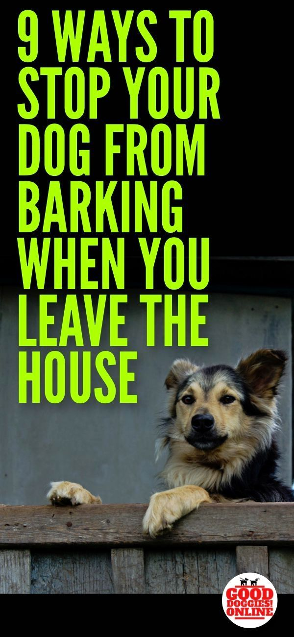 If Your Dog Barks As Soon You Leave The House Click Pin For Various Training Ideas Dogtraining Dogcommandstraining