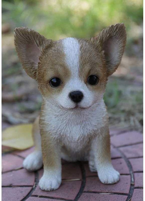 смотреть фото чихуахуа с висячими ушами сахалин глазами