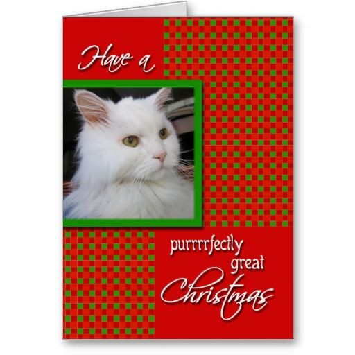 21 best images about pet photo christmas cards on for Best personalized christmas cards