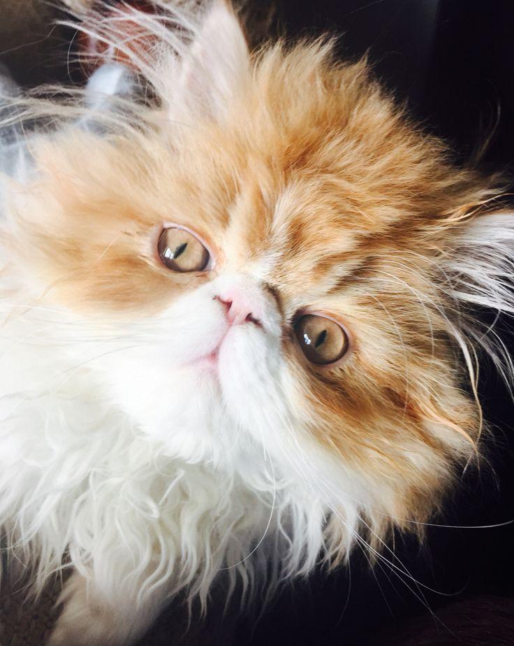sobre Cajas De Arena Para Gato en Pinterest  Cajas de gato, Caja